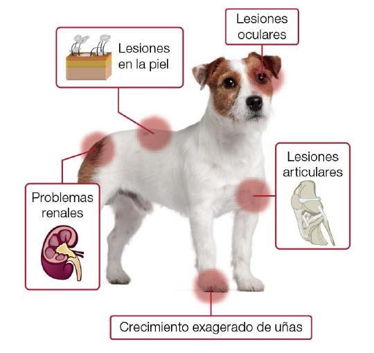 ¿Qué es la Leishmaniosis canina? Guía de síntomas, prevención y tratamiento 2