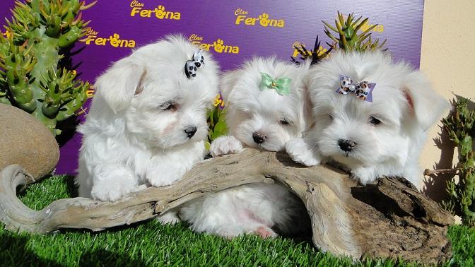 Nombre de perros más populares