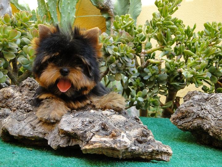 Los nombres de perros más populares y su significado 1