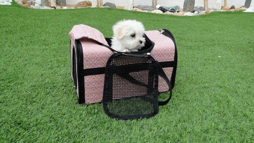 Recomendaciones para viajar con mascotas por tierra, mar y aire 3
