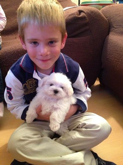 Perros toy y educación de los niños