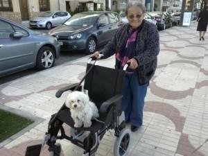 Abuela y Vera Bichon Maltes by Clan Ferona